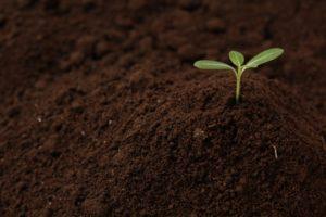 綺麗な土から出る芽