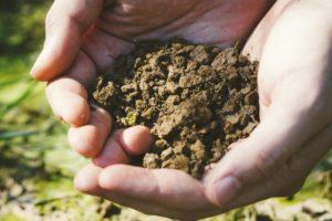 掬った綺麗な土