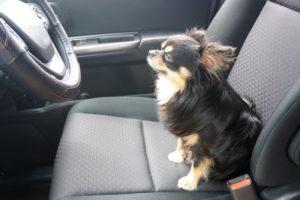 車内,消臭,臭い,匂い,ペット,動物