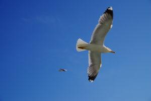 モーリシャス沖座礁船 重油流出 海鳥